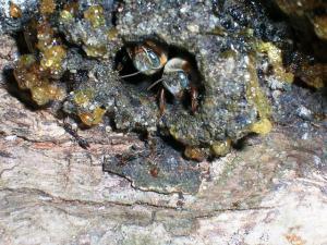 La foto macro de las abejas que le mereció mención para Miguel Ángel...